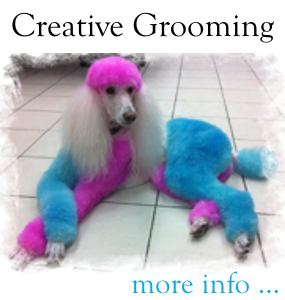 Creative Grooming at Loyal Companions