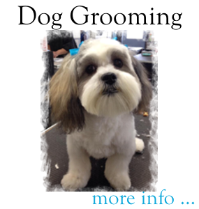 Dog Grooming at Loyal Companions