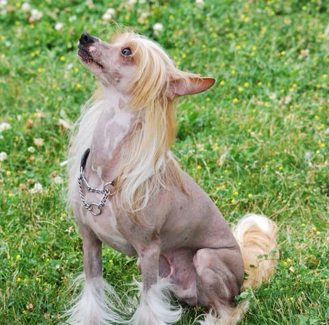 Dog Grooming Tecumseh Ontario